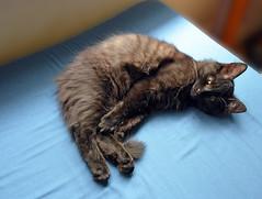 Relaxation (Caulker) Tags: kitten vaska 3 month old august 2016