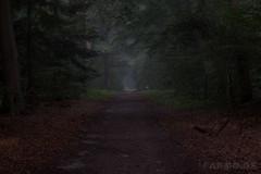 Dunkler nebeliger Wald (GuinTheReal) Tags: dark dunkel kw292016 mist nebel wald woods