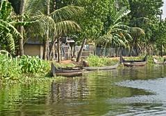 Kerala's Transportation (The Spirit of the World) Tags: boats canoes motorboat kerala india southernindia water backwaters lake transportation palms trees tropical peaceful serene shore shoreline