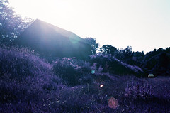 01-018 (tylerquinn82) Tags: lomochrome purple lomochromepurple lomography 35mmfilm shotonfilm film lensflare sun barn car pontiacvibe surrealism field beauty canoneoselan pentwater michigan pentwatermichigan summer filmphotography