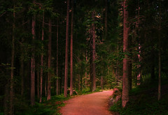In The Forest (tinamar789) Tags: forest landscape tree trees trace path pine morning luukki espoo