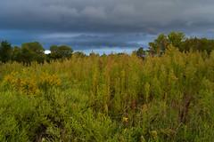 Sea of Weeds (thefisch1) Tags: storm plants vegetation interesting cumulo nimbus thunderstorm texture wind sky cloud nikon nikkor flint hills prairie oogle calendar kansas