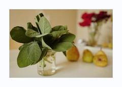 stilllife4 (lux fecit) Tags: paris pears sage roses kitchen homegrown