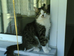 7 (1091) (CATS - DOGS) Tags: street cats animals cat kittens stray kedi sokak yavru kediler kedileri trkyetur
