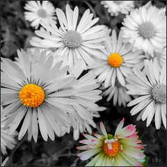 Flowers (edu_izu) Tags: flowers flores
