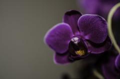 flower (novusgraph) Tags: life flowers flower macro love nature beautiful closeup living natur valentine growth growing