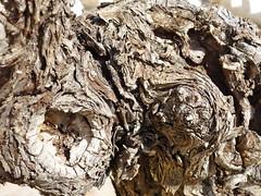 aus dem Weinstock (radochla.wolfgang) Tags: bäume spanien spaziergang costablanca