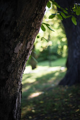 Lurking From Behind (Kat Terek) Tags: park trees summer sunlight nature leaves oslo norway canon 50mm weeds gate streetphotography f18 magicmoments magicrealism norwegia canon550d canont2i norwagia