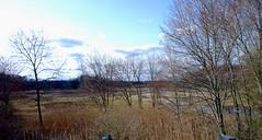 Pequabuck river (pedrik) Tags: usa river connecticut swamp farmington photoeditor pequabuck htconex 1113652015
