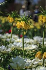 Luzerner Garten (dieeule.ch) Tags: nature schweiz switzerland europa natur luzern orte blume lucerne ebikon luzernergarten