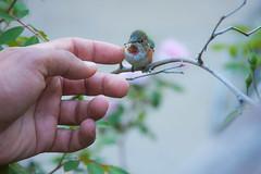 Helping Nature (Atascaderocoachsam) Tags: