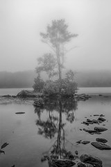 Island In The Mist- (desouto) Tags: flowers sky nature water clouds stream stones lakes ponds hdr