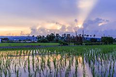 sunset lights () Tags: sunset       taiwan clouds lights light mountain    tree