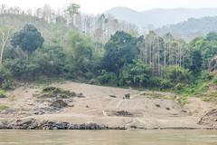 _RJS8174 (rjsnyc2) Tags: richardsilver richardsilverphoto richardsilverphotography nikon nikond810 d810 laos intrepidtravel asia mekong river mekongriver water travel travelphotographer travelphotography