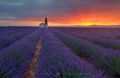 Lavender morning (Jackie Tran Anh) Tags: valensole france house tree lavendefields lavenderfields morning sun sunrise sunshine sunburst lights clouds sky landscape outdoot