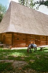 (elgartheseven) Tags: ukraine lviv horse