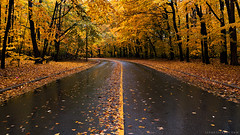 Meadow Wood (rh89) Tags: road camera wood autumn trees red orange toronto canada color colour tree fall wet leaves lines rain yellow contrast forest port leaf woods colorful path sony iii meadow line foliage credit colourful foilage lead leading compact divider divide rx100 rx100iii