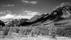 Mountain Meadow DSL4516 (iloleo) Tags: alberta banffnationalpark landscape mountains summer meadow scenic vista nikond7000 bw forest canada nature