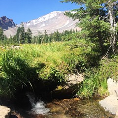 Drank a lot of Shasta spring water today. (seanflannagan) Tags: mtshasta shasta panthermeadows meadow mountain springwater water purity sacredsites