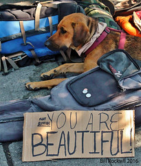 You Are Beautiful Too (billrock54) Tags: dogs homeless beautiful jesus christains beggar quality tranquillity night billrockwell surreal sad pets red hi men art prints equal dude seattle metro cityscape exhibition love urban utopia mensbestfriend exile sreet international whatyoudoforthepooryoudoforme crown lines