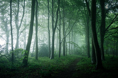 Bacton Wood 04/06/2016 (Matthew Dartford) Tags: eastanglia bokeh depth distance fog foggy forest glow glowing horizontal layers lines norfolk sidelight soft spooky tree wood woodland