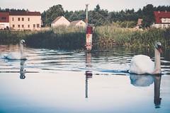 DSCF2637 (peterulrich.net | Berlin Webdesigner) Tags: spree brandenburg kajak kayak kajaktour kayaktour kajaktrip kayaktrip gumotex gumotexswing2 kanu schlauchkajak peterulrichnet 2016 august schlauch fluss river