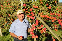 IMG_5952 (mavnjess) Tags: 28 may 2016 harvey edward giblett newton orchards manjimup harveygiblett newtonorchards cripps pink lady crippspinklady popaharv eating apple crunch crunchy biting apples pinklady pinkladyapple harv gibbo orchard appleorchard orchardist