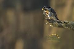 Bugs make me Itch (Scott Joshua Dere) Tags: falcon cliffs bugs flies cliffhanger fastestintheworld