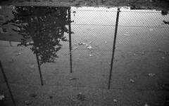 Reflection in a pool of water (Nils Kristofer Gustafsson) Tags: blackandwhite bnw ishootfilm retro rollei 400s lomo lomography sweden rebro keepfilmalive filmisnotdead filmphotography film rodina adonal yashica electro cc 35mm