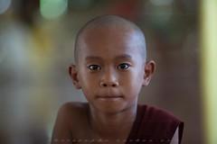 _MG_5450-le-18_04_2016_wat-thail-wattanaram-maesot-thailande-christophe-cochez (christophe cochez) Tags: burmes burma birmanie birman myanmar thailand thailande maesot myawadyy monk bonze novice religion watthailwattanaram travel voyage bouddhisme buddhism portrait