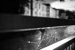La tela de araa (Anvica) Tags: teladearaa spiderweb blancoynegro blackandwhite feldkirch austria fuji x100