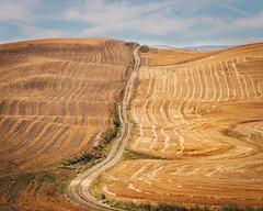 Summer Palousing (Pedalhead'71) Tags: farmington washington palouse plalousing road rural landscape garfield unitedstates us