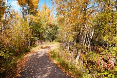 Fall Walk (Wendy Oor) Tags: fall outdoors path leaves yellow orange green red nature seasons scenery trees