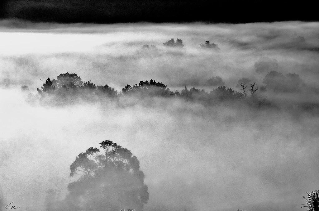 1600-neblinas (19)