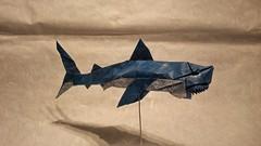 White shark by Nguyen Ngoc Vu, folded by me. (Tomasz Krawczyk Origami) Tags: shark origami nguyen whiteshark vog tomasz krawczyk nguyenngocvu