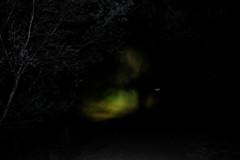 following my future (emer ann hayde) Tags: beach water night forest woodland dark walking movement nikon alone glow escape darkness photoshoot nightshot fear australia creepy adventure doubletake help flashlight nightlife afraid scared dreamlike lakeland waterside lonelyness walkingaround irishartist followme nightshooting lakesentrance nikond3200 abondon irishphotographer dublinphotographer nofliter emerannhayde