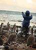 Snorri_Island_Vetur_2014-15-27.jpg (Sigrun Saemundsdottir) Tags: ocean winter white snow cold ice water birds animals frozen geese iceland outdoor feedingthebirds fowl chill birdfeeding snorri