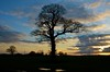 Haughton spring sunset (Ugborough Exile) Tags: uk trees england nikon staffordshire midlands stafford 2015 haughton treesubject treesdiestandingup d7000