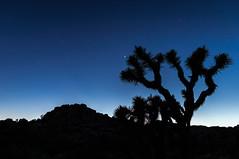 Early Stars (2_stroke) Tags: joshuatree