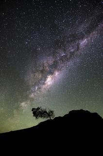 Windswept Tree beneath the Milky Way - Pinnacles Desert, Western Australia