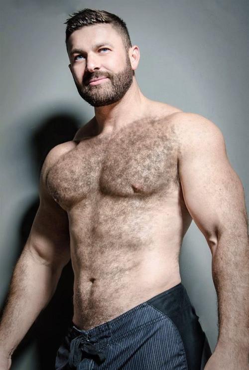 Clan Of The Speedo Bears   Big Hairy Bear Men In Tiny Swimsuits