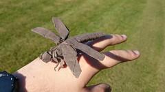 Satoshi kamiya dragonfly (Mdanger217) Tags: