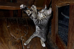 Plug & Play (N808PV) Tags: game night cat kitten play young plug stray lx7