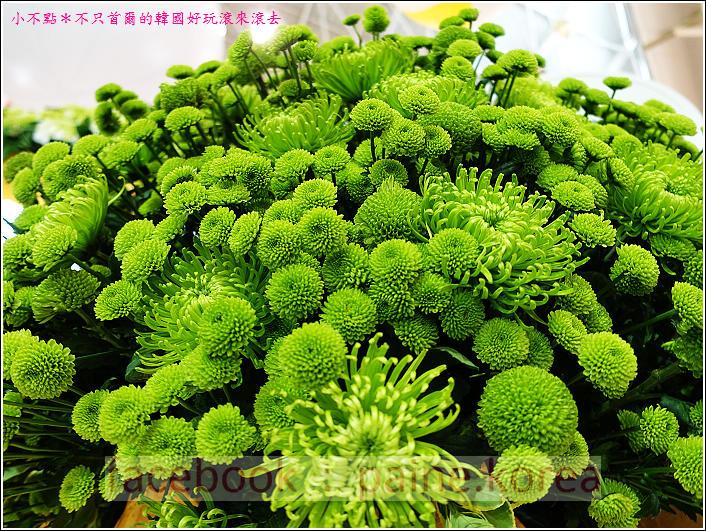 高陽國際花卉博覽 (49).JPG