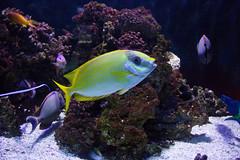 IMG_0002 (Samihan Patel) Tags: blue moon flower zoo monkey jellyfish seahorse turtle snake houston flamingos frog crocodile elephants sealion dory htx