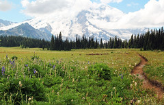 And there was a pathway...... (McCoy352) Tags: grandpark hiking trail pathway mountrainiernationalpark washington snow glaciers views fun meadows alone solitude pacificnorthwest wildflowers afewlingering clouds bluesky