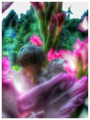 Little angels! (frankhimself) Tags: blue lens bokeh focus soft lilaccolours mauve purple greens colours stunning heavenly inspirational dreamy beautiful filters macro gladioli nature flowers white pinks sun sunlight light angel