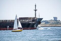Pacific Pearl (PAJ880) Tags: boston ma island harbor pacific deer bow pearl mast sailboats salvage carrier bulk