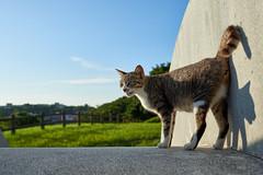 Cat (428sr) Tags: cat nikon neko