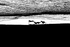 The Race (Lior. L) Tags: sunset sea blackandwhite bw dog motion reflection beach dogs monochrome race israel blackwhite telaviv action silhouettes tlv therace telavivbeach